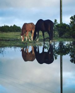 Island magic in Saaremaa island saaremaa magic horses sunday idyllic